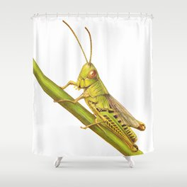 Grasshopper by Lars Furtwaengler | Colored Pencil / Pastel Pencil | 2014 Shower Curtain