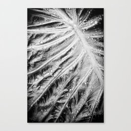 Wet Dream Canvas Print