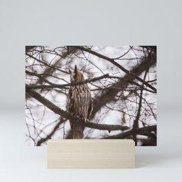 Long Eared Owl Mini Art Print