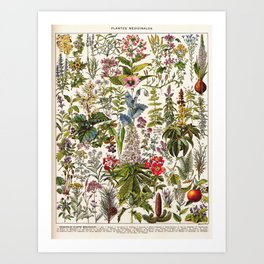 Adolphe Millot - Plantes Medicinales A - French vintage poster Art Print
