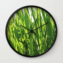 Large reeds leaves in a cane grove Wall Clock