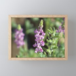 Closeup Purple Desert Lupine Coachella Preserve Framed Mini Art Print