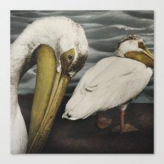 Tom Feiler Pelican Canvas Print