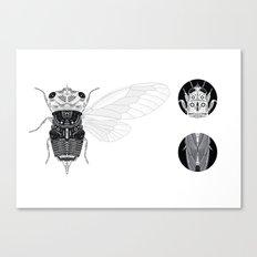cicada (i) Canvas Print