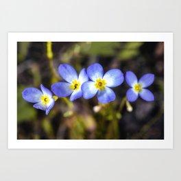 Four tiny bluet flowers Art Print