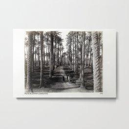 Sakkara Metal Print