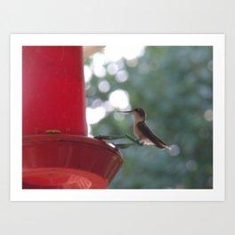 Hummingbird w/ bokeh Art Print