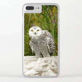 Curious Snowy Owl Clear iPhone Case