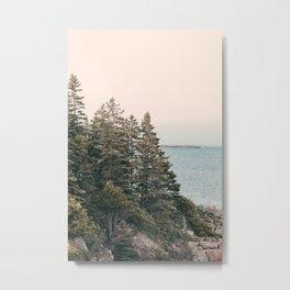 Maine Pines Metal Print