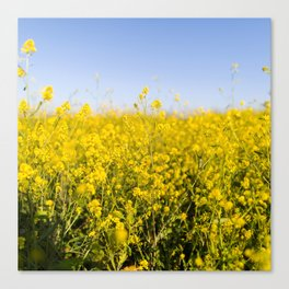 Bright yellow spring flowers pattern blue sky photography Canvas Print