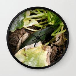 Zucchini in garden Wall Clock