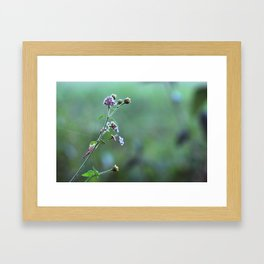 Wild flowers and cobwebs Framed Art Print