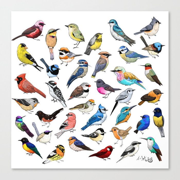 Birds Leinwanddruck