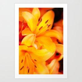Polleny Art Print