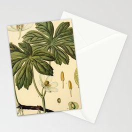 Vintage Print - Birds and Nature (1900) - Mandrake Stationery Cards