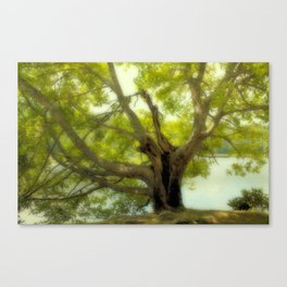 "Tree of Life "" Color"" Canvas Print"