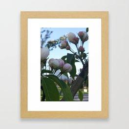 City Blossoms Framed Art Print