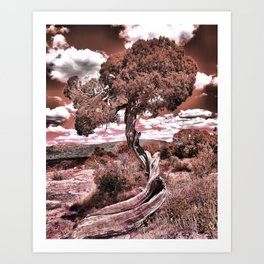 Twisted Juniper (Sepia) Art Print