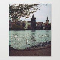 PRAGUE SWANS Canvas Print