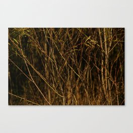 Beyond The Branches  Canvas Print