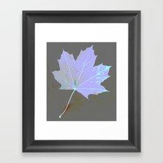 Canadian Maple Leaf Framed Art Print