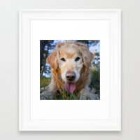 golden retriever Framed Art Prints featuring Golden Retriever by eudaldrs