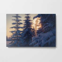Midday sun on snow covered winter spruce trees Metal Print