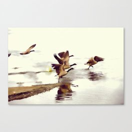 The Take Off - Wild Geese Canvas Print