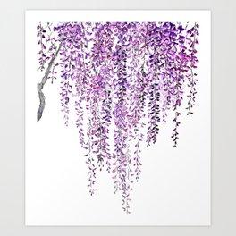 purple wisteria in bloom Art Print