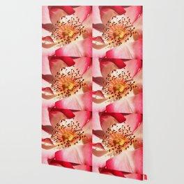 Pomagranate Red Spring Blossom Wallpaper
