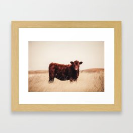 Red Angus Cow Art Framed Art Print