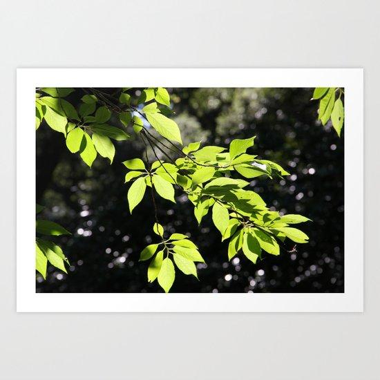 Magic leaves Art Print