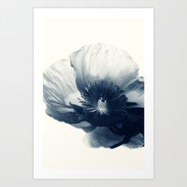 Cyan Poppy #3 Art Print