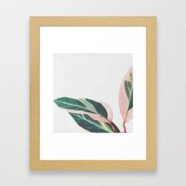 Pink Leaves II Framed Art Print