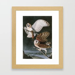 Barn Owls, the Birds of America by John James Audubon Framed Art Print