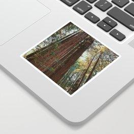 Redwood Trees Sticker