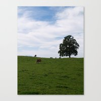 cows Canvas Prints featuring Cows by Natalie Reed