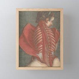 The Anatomical Angel, Jacques-Fabien Gautier Dagoty, 1746 Framed Mini Art Print
