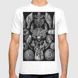 Ernst Haeckel Cirripedia Barnacles Crabs T-shirt