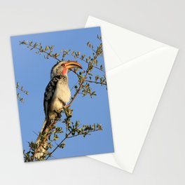 The Real Zazu Stationery Cards