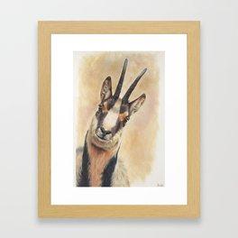 chamois Framed Art Print
