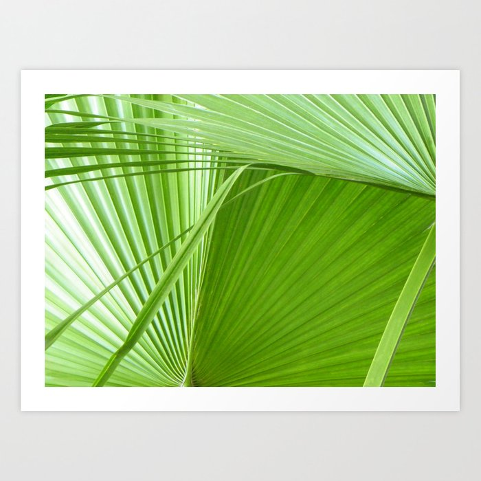 Palm Leaves // Tropical Wall Art, Beach Cottage Decor, Coastal Art Art Print