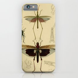 Vintage Print - Universal Dictionary of Natural History (1849) - Grasshoppers iPhone Case