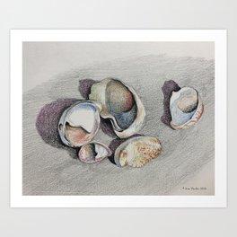 Slipper Shells Art Print