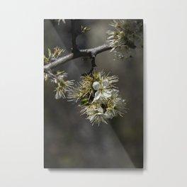 Sloe flowers #2 Metal Print