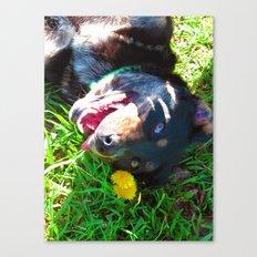 Dog Tanning Canvas Print