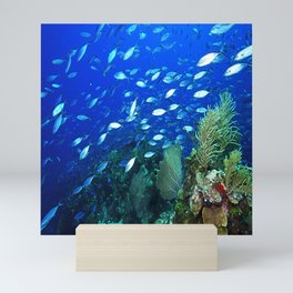Roatan Reef Mini Art Print