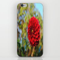 dahlia iPhone & iPod Skins featuring Dahlia by Renee Trudell