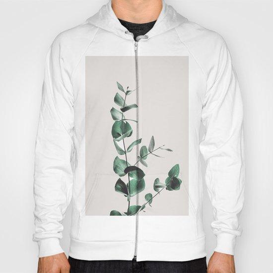 Eucalyptus by andreas12
