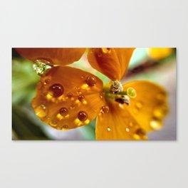 Tiny Dew Drops Macro Canvas Print
